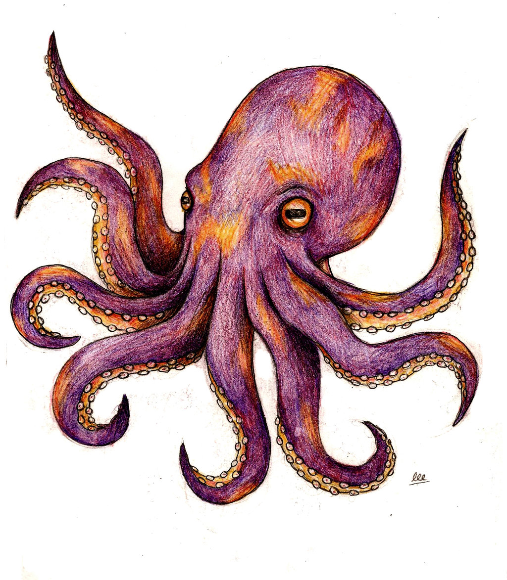 Octopus Tattoo Design