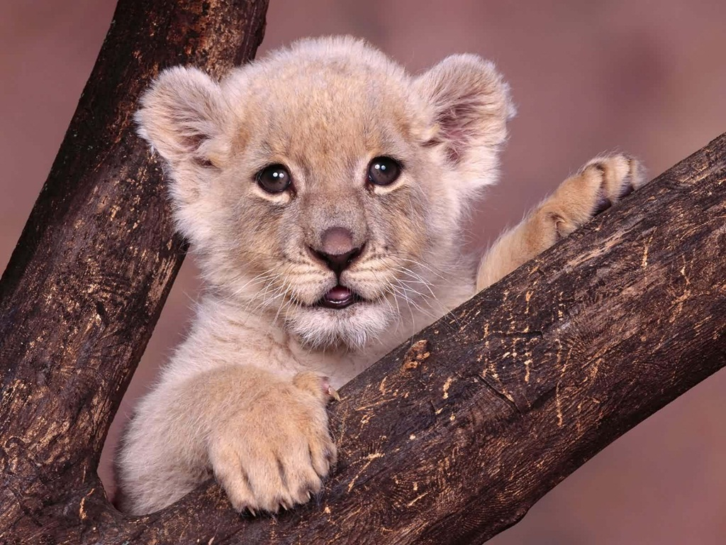Cute Animal Wallpapers (1)