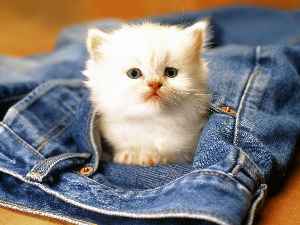 Cute Animal Wallpapers (19)