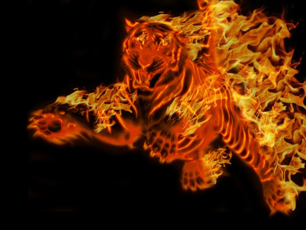 tiger wallpapers (3)